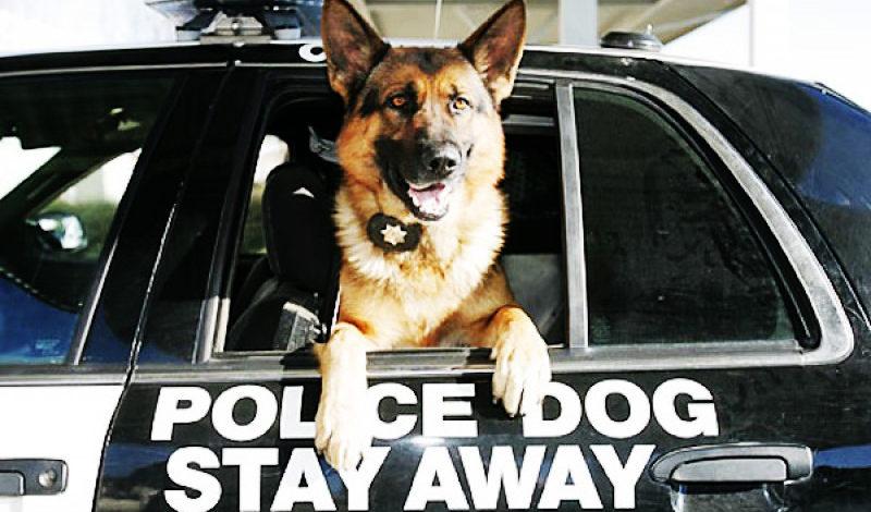 Police Dog News Story Bail Bond